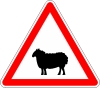 Attention ! Danger (par ici) de moutons noirs !