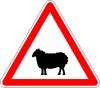 Attention ! Danger (par ici) de moutons noirs !